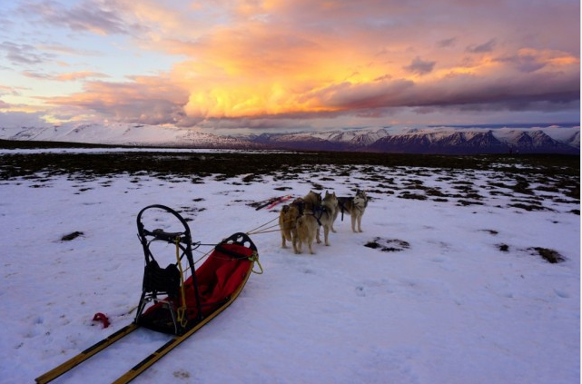 Excursions en chiens de traineau en Islande