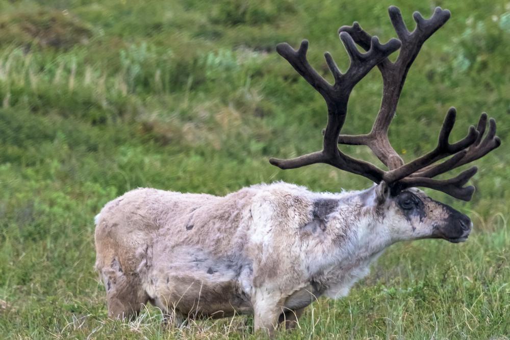 Que faire a Egilsstaðir